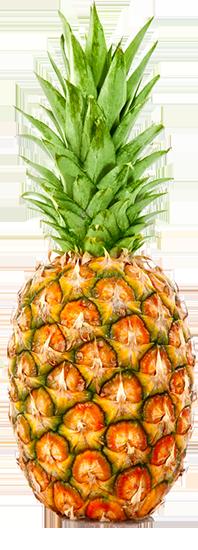 cruise-ship-tour-pineapple
